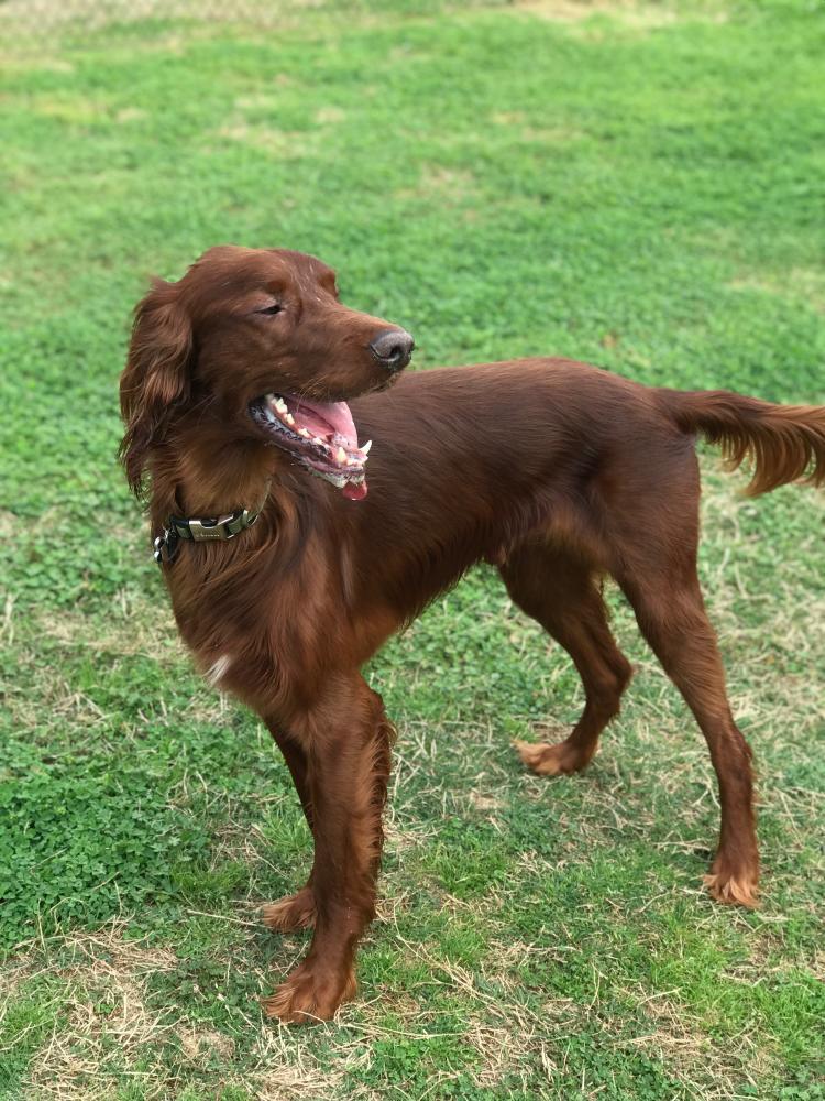 Lost Male Dog last seen Near Linda Ln & Ellen Ln, Beaumont, TX 77708