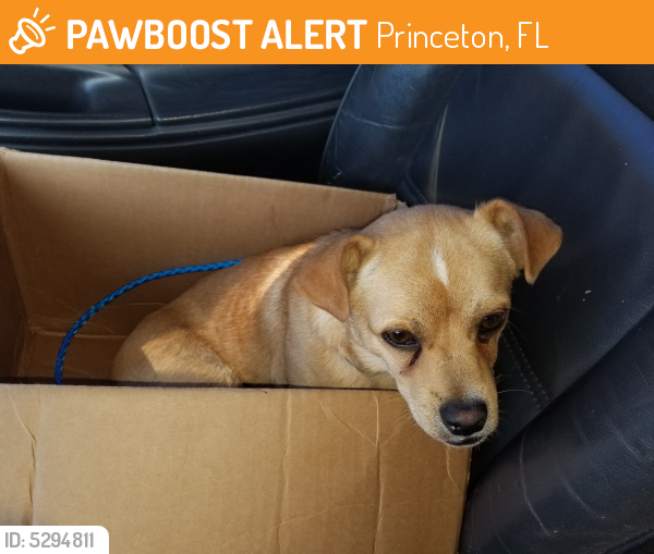 Surrendered Male Dog in Princeton, FL 33032 (ID: 5294811