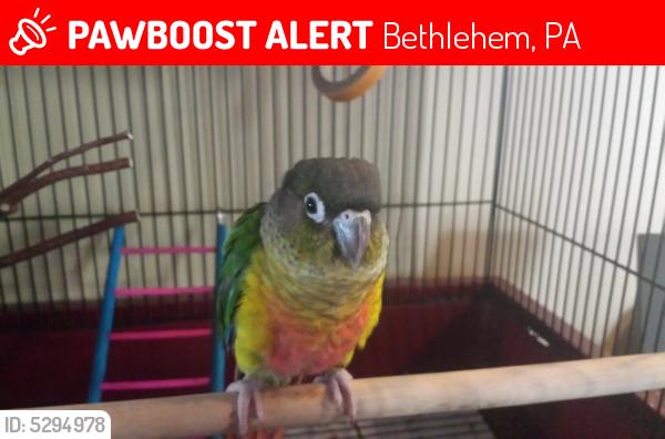 Lost Bird in Bethlehem, PA 18018 Named Marty (ID: 5294978