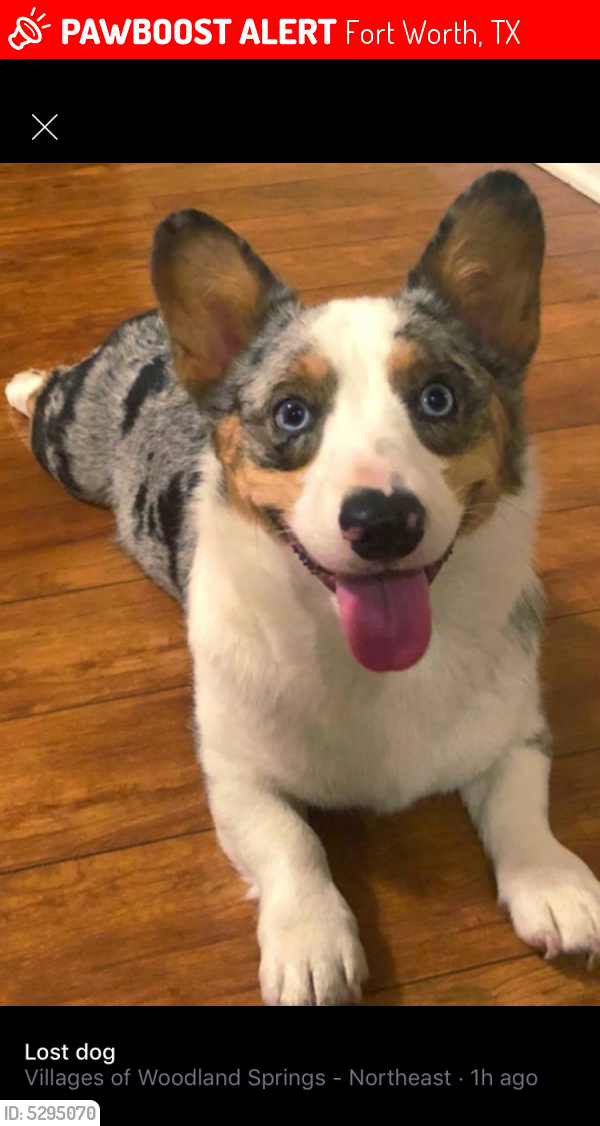 Lost Male Dog in Fort Worth, TX 76244 Named Gunter (ID: 5295070