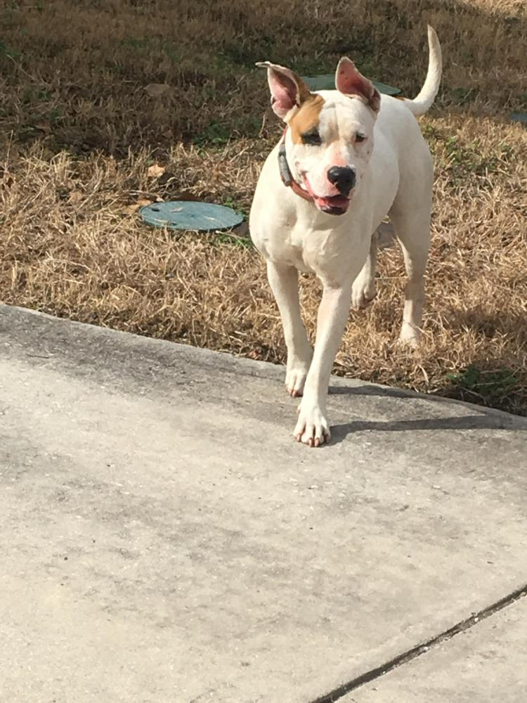 Lost & Found Dogs, Cats, and Pets in San Antonio, TX 78245