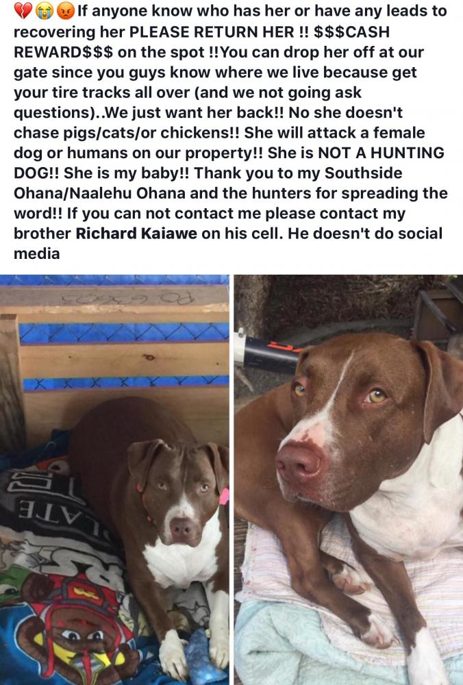 Lost Female Dog last seen Near Hawaii Belt Rd & Kaohe Mauka Rd, Captain Cook, HI 96704