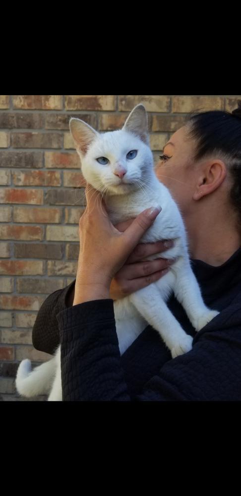 Found/Stray Unknown Cat last seen Near Winnie Cir & George St, Silsbee, TX 77656