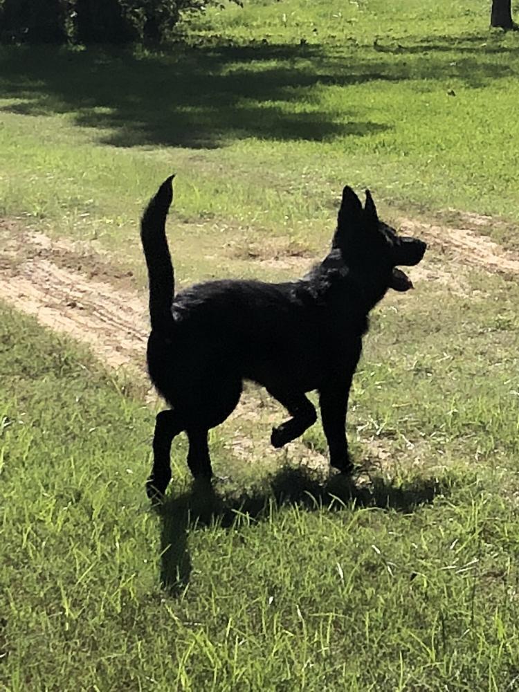 Lost Female Dog last seen Near Old US Hwy 90 & Tulane Rd, Orange, TX 77630