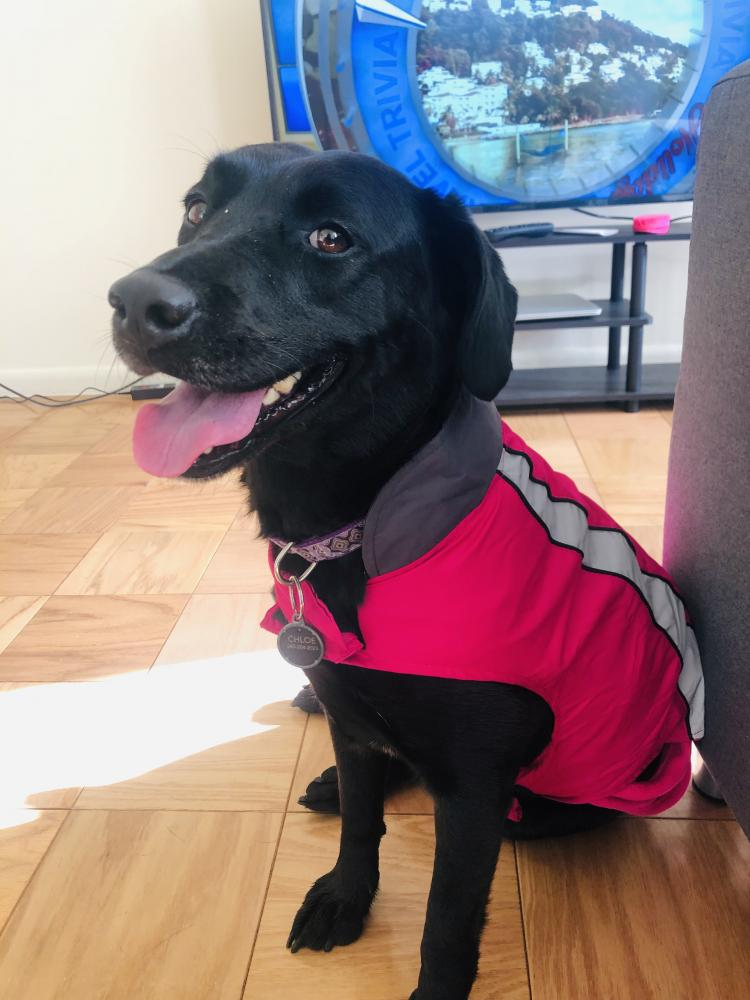 Lost Female Dog last seen Near Livingston St NW & Connecticut Ave NW, Washington, DC 20015