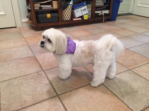 Lost Male Dog last seen Near Niumalu Loop & Paoo St, Honolulu, HI 96825