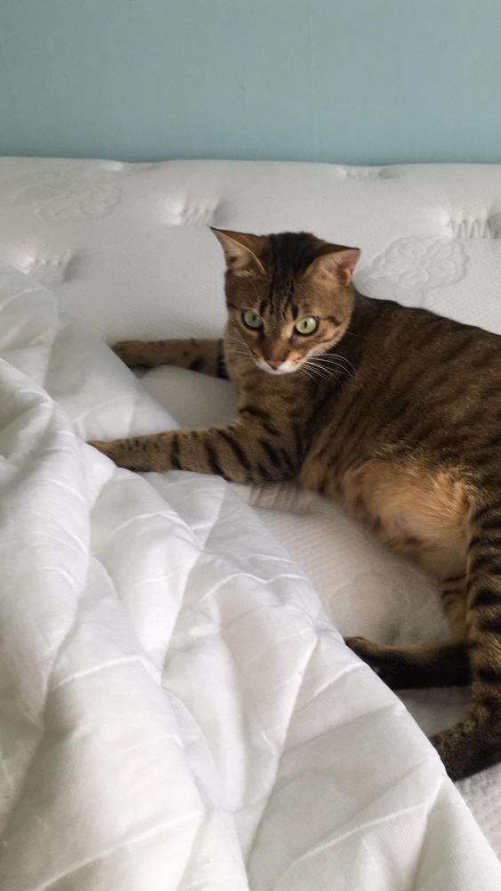 Lost Male Cat last seen Near Richmond Ave & Chicago Ave, Silver Spring, MD 20910