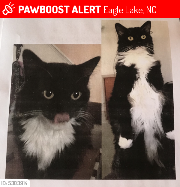 Lost Male Cat last seen Near Gerald Dr & Sullivans Trace Dr, Eagle Lake, NC 28217