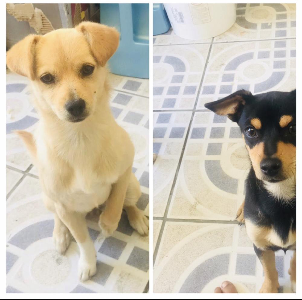 Lost Unknown Dog last seen Near E Morningside St & Atlantic Avenue , Long Beach, CA 90805