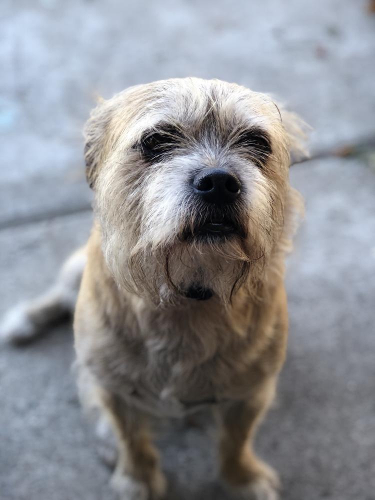 Lost Male Dog last seen Near el Camino Ave & San Luis St, Paramount, CA 90723