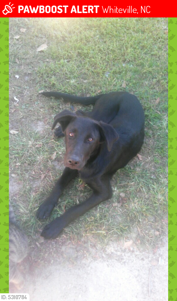 Lost Male Dog last seen ., Whiteville, NC 28472