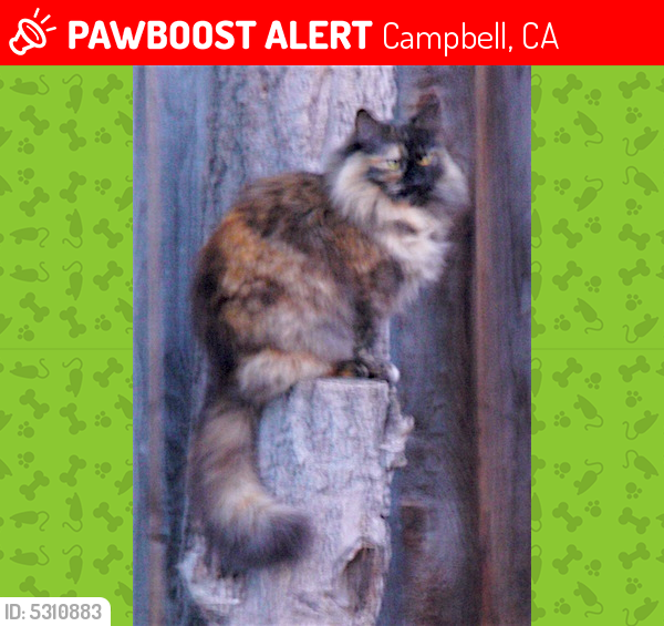 Lost Female Cat last seen Near Central Park Dr & Sweetbriar Dr, Campbell, CA 95008