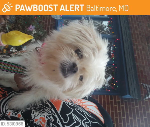 Rehomed Female Dog last seen Near Savoy St & Marbourne Ave, Baltimore, MD 21230