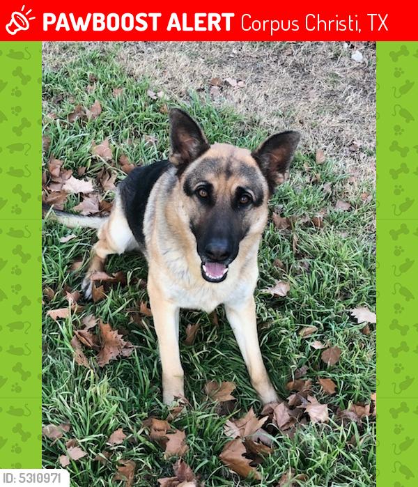 Lost Male Dog last seen Near Bradford Dr & Weir Dr, Corpus Christi, TX 78415