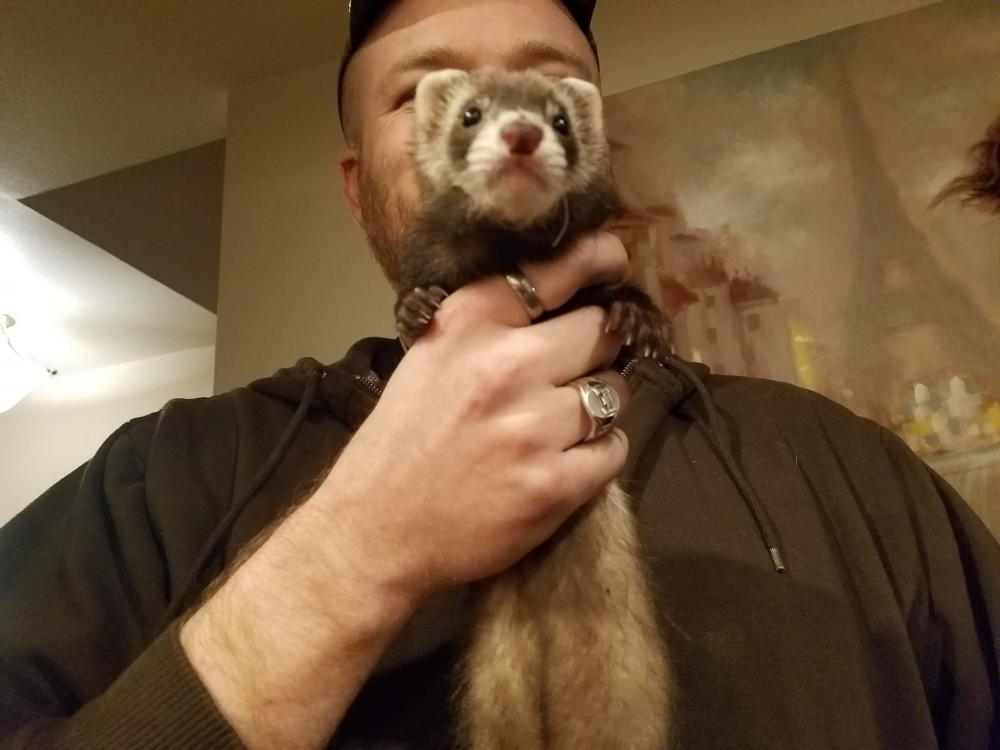 Lost Female Ferret last seen Near E Campo Bello Dr & N 2nd Pl, Phoenix, AZ 85022