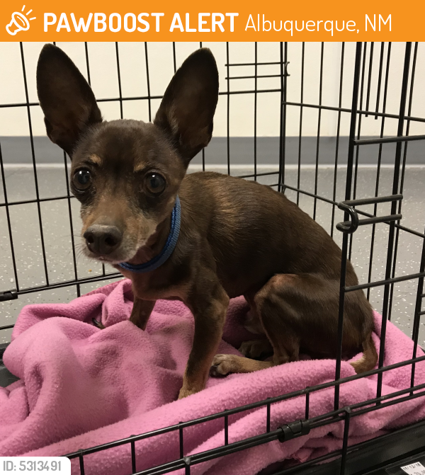 Surrendered Male Dog last seen Near Madison St NE & Menaul Blvd NE, Albuquerque, NM 87110