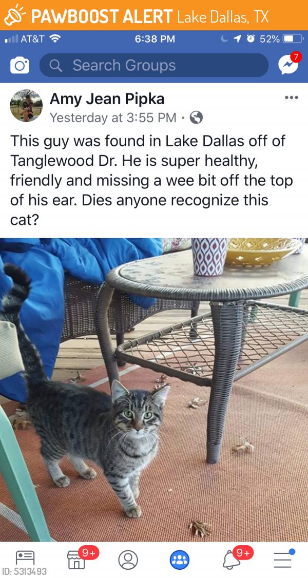 Found/Stray Male Cat last seen Near N Denton Dr & N Stemmons Fwy, Lake Dallas, TX 75065