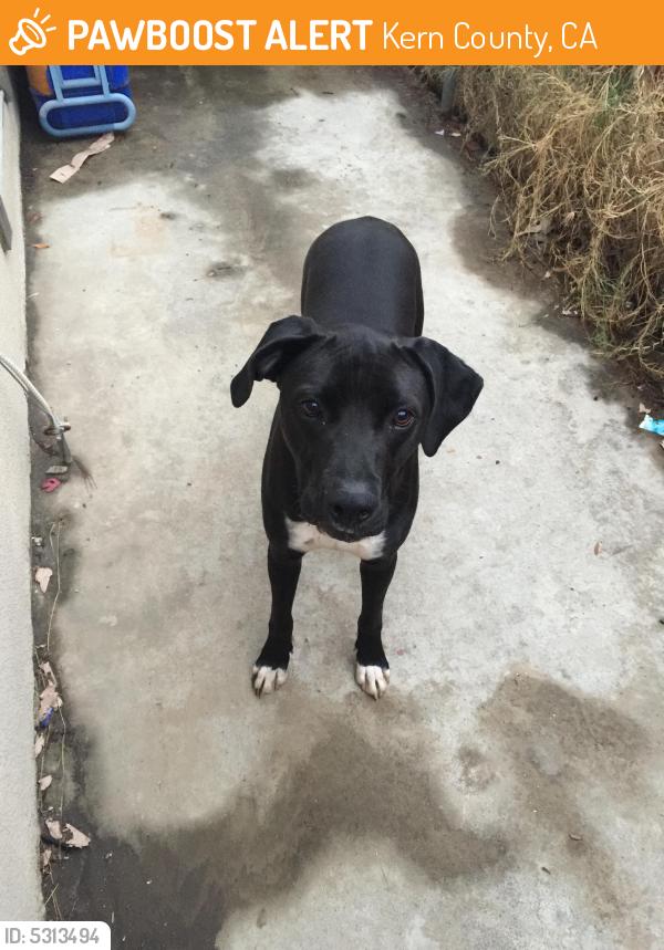 Found/Stray Male Dog last seen Near S K St & Wilson Rd, Kern County, CA 93304
