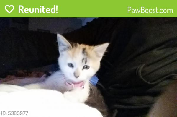 Reunited Female Cat last seen Near Crystal Ridge Dr & Redwood Rd, West Jordan, UT 84084