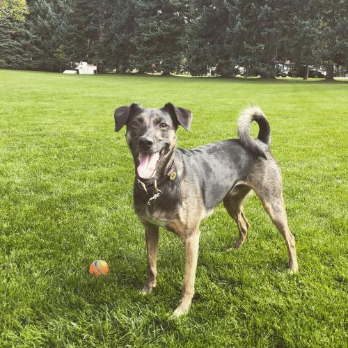 Lost Male Dog last seen , Great Falls, VA 22066
