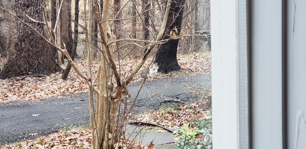 Found/Stray Unknown Cat last seen Near Crowell Rd & Westford Dr, Vienna, VA 22182