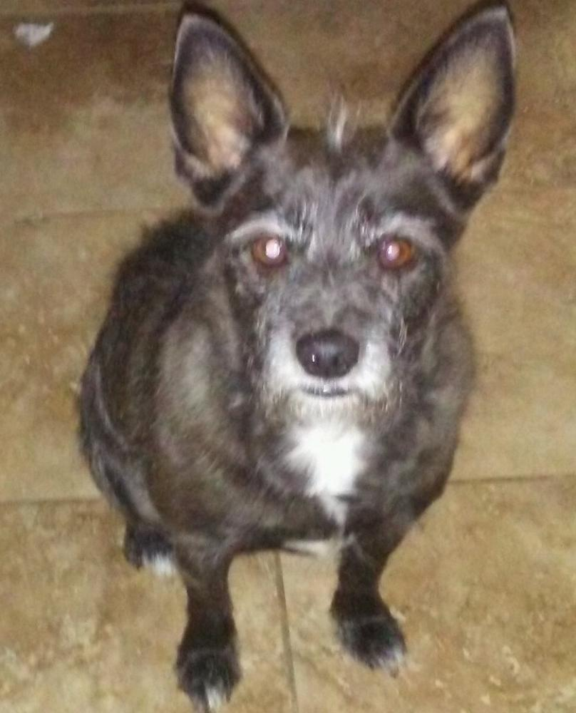 Lost Male Dog last seen Near E Rancho Dr & N 14th Pl, Phoenix, AZ 85016
