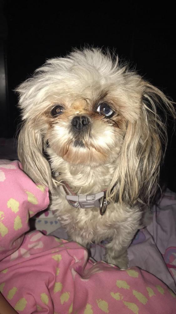 Lost Female Dog last seen Near Valley Blvd & Velma Ave, El Monte, CA 91731