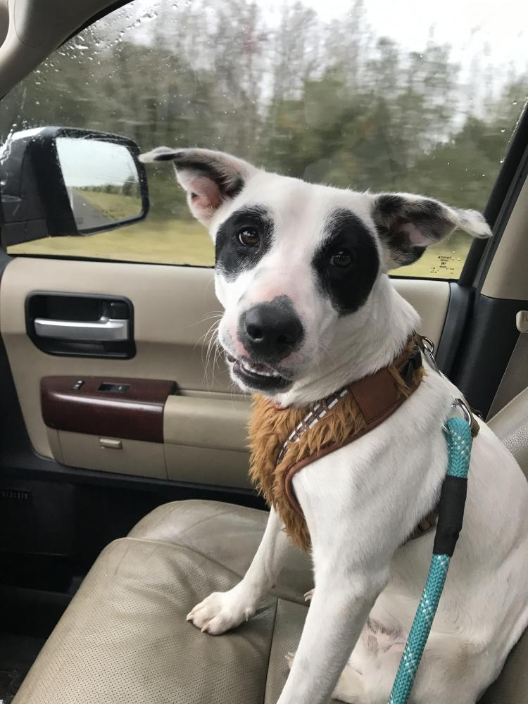 Found/Stray Male Dog last seen Bayou Din Drive, Beaumont, TX, USA, Jefferson County, TX 77705