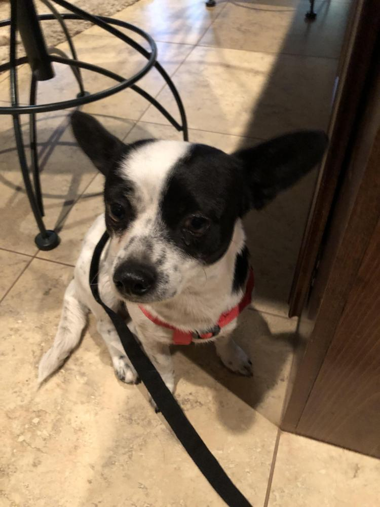 Found/Stray Female Dog last seen College street and avenue e, Beaumont, TX 77707