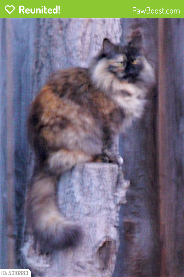 Reunited Female Cat last seen Near Central Park Dr & Sweetbriar Dr, Campbell, CA 95008