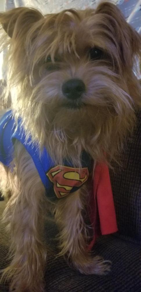 Lost Male Dog last seen Near 5th St & Magnolia Ave, Port Neches, TX 77651