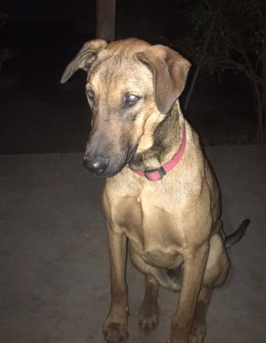 Lost Male Dog last seen Near W Imperial Hwy & S Broadway, Los Angeles, CA 90061