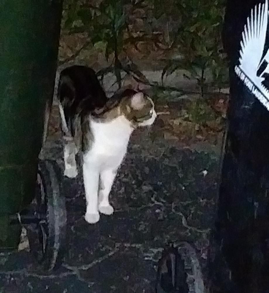 Lost Female Cat last seen Near SW 4th Ave & SW 7th St, Fort Lauderdale, FL 33315