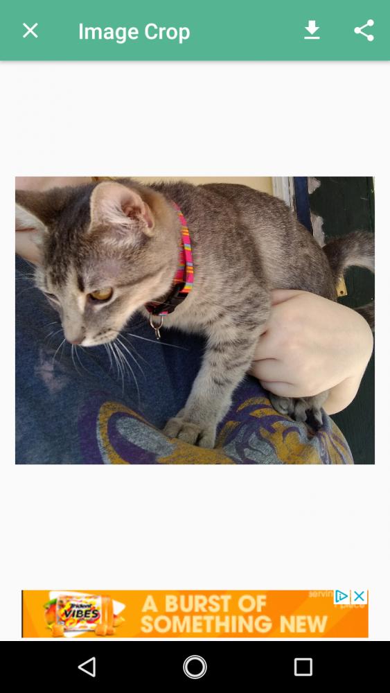 Found/Stray Unknown Cat last seen Near Washington Blvd & W Commerce Pkwy, Beaumont, TX 77705