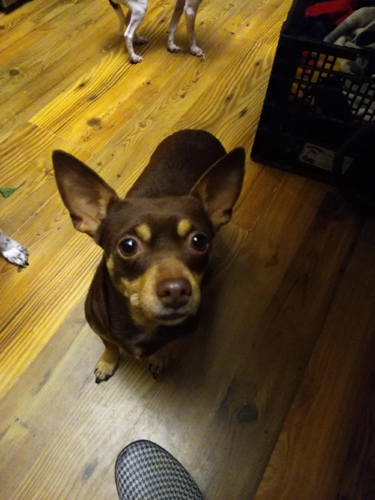 Lost Female Dog last seen Llano Street, Port Neches, TX, USA, Port Neches, TX 77651