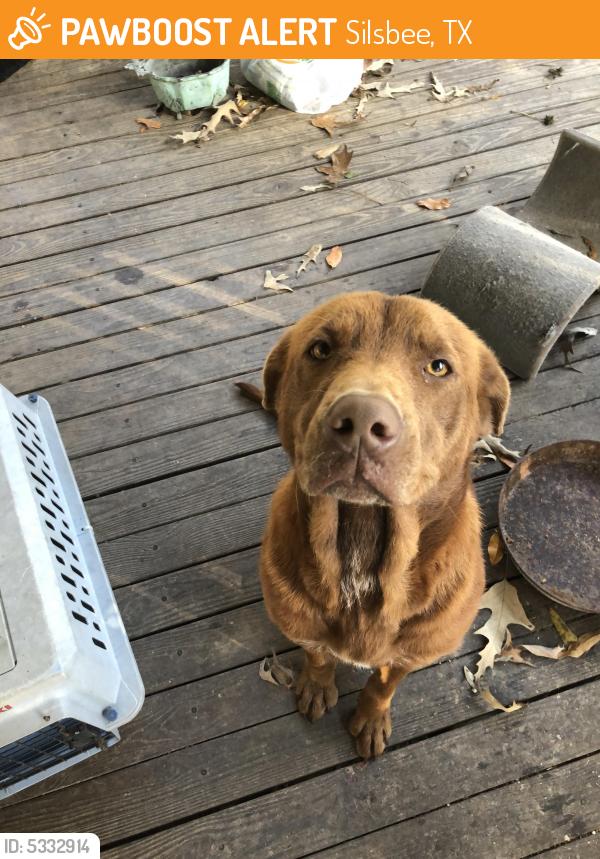Found/Stray Female Dog last seen Hey 92 North & County Line Road Silsbee Tx, Silsbee, TX 77656
