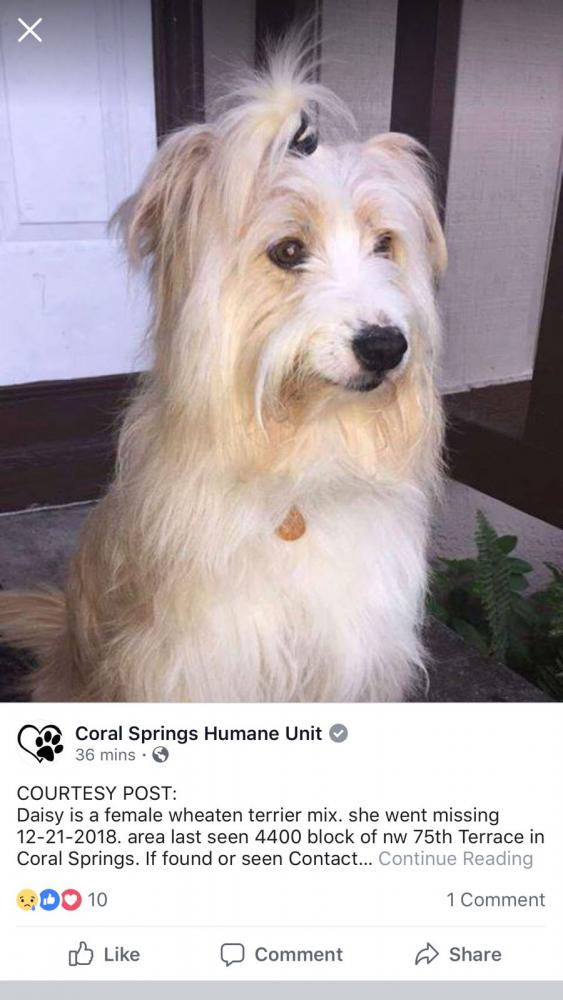 Lost Female Dog last seen Near NW 75th Ter & NW 44th Ct, Coral Springs, FL 33065
