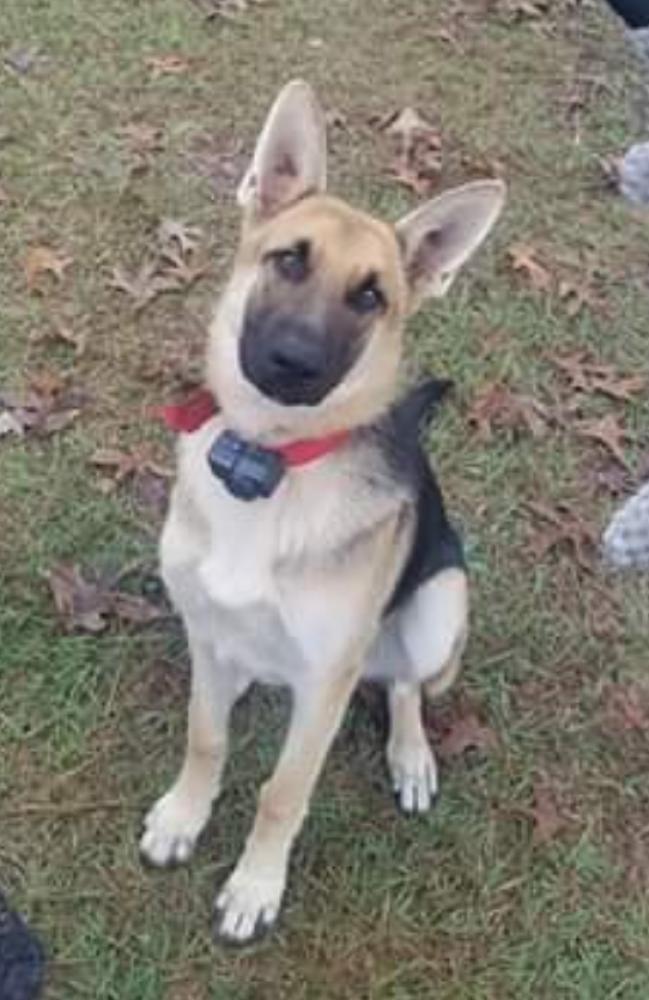 Lost Female Dog last seen Near Georgia 42, Knoxville, GA, USA, Knoxville, GA 31050