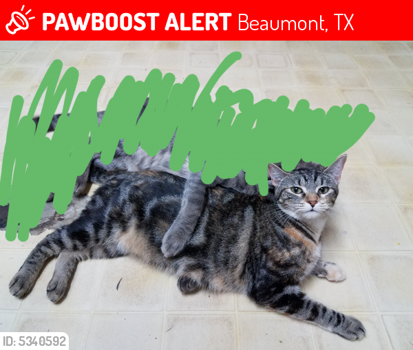 Lost Female Cat last seen Near Redwood Dr & Timberwood Ln, Beaumont, TX 77703