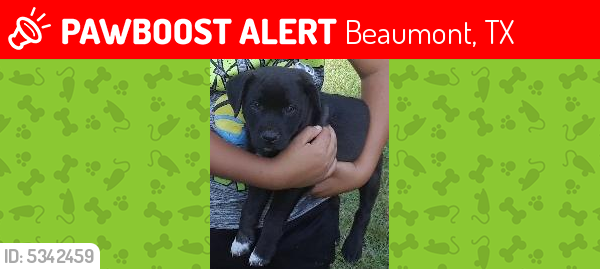 Lost Male Dog last seen Near Baker Rd & Ember Ln, Beaumont, TX 77707