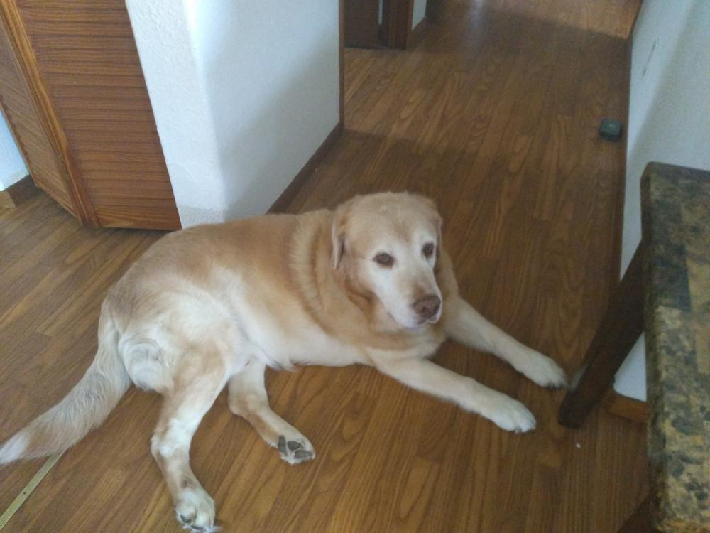 Lost Male Dog last seen Near 38th Ave & Orchid Land Dr, Orchidlands Estates, HI 96760