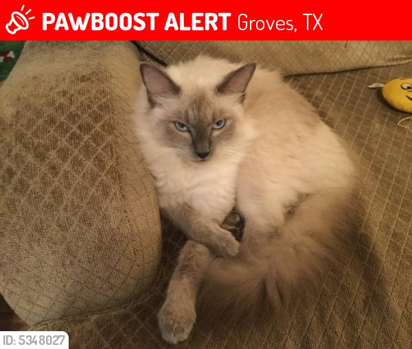Lost Male Cat last seen Near Terrell St & Oakdale Dr, Groves, TX 77619
