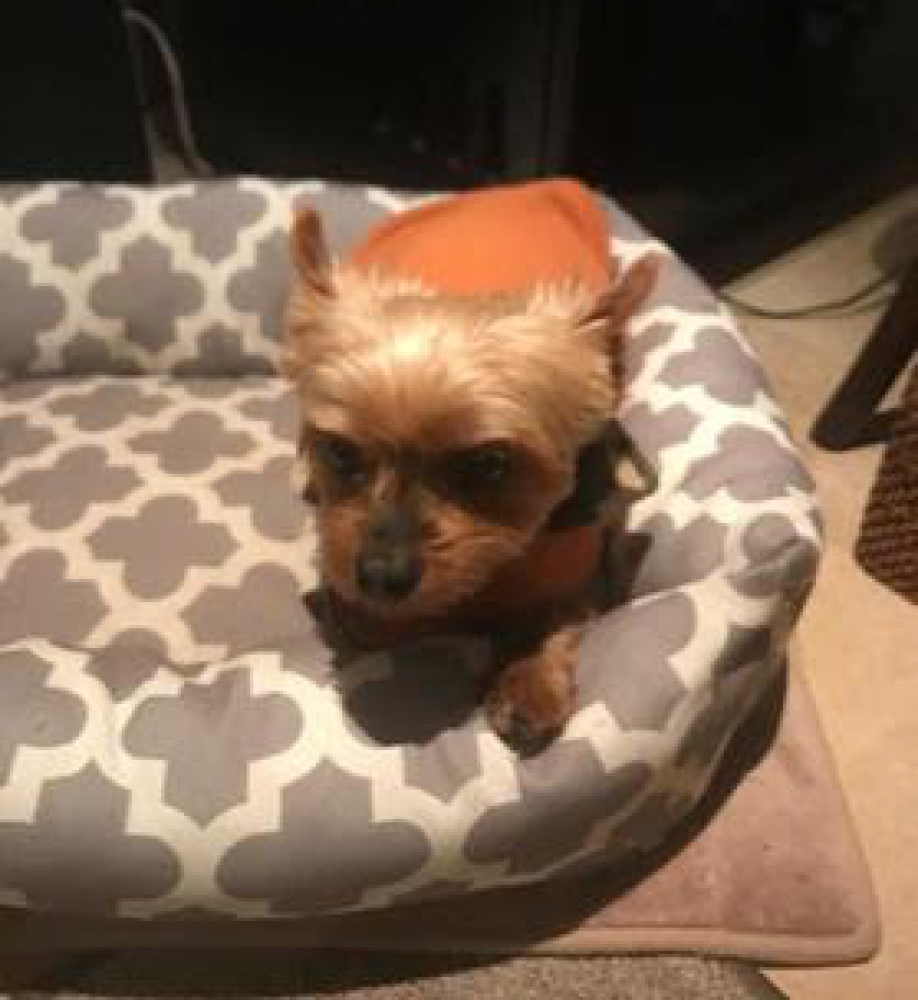 Lost Male Dog last seen Near Old Ranch Rd & Old Ranch Dr, Los Altos Hills, CA 94024