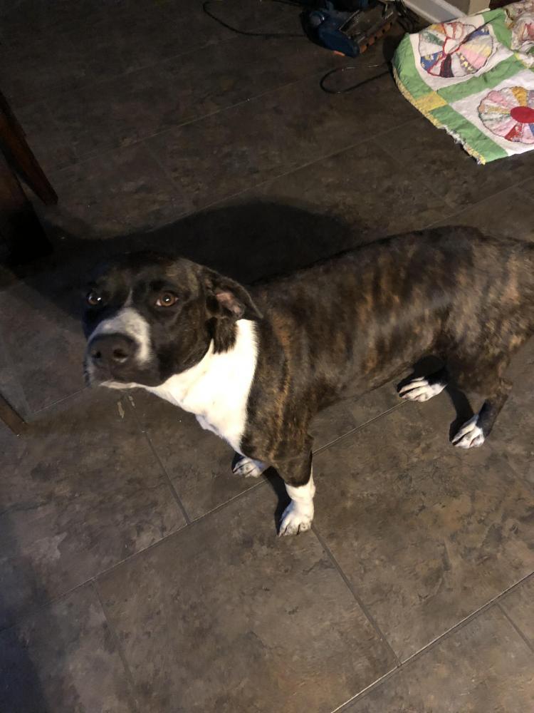 Lost Female Dog last seen Wheeler, Hardin County, TX 77657