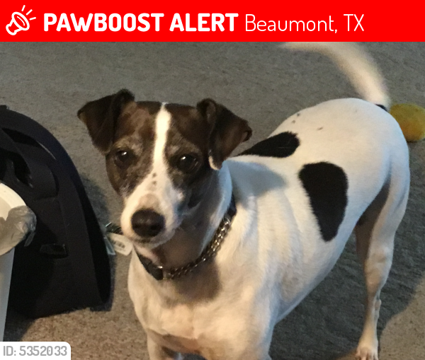 Lost Male Dog last seen Near Treadway Rd & Collier St, Beaumont, TX 77703