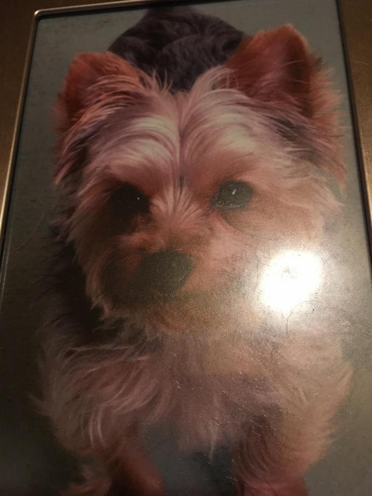 Lost Male Dog last seen Near Sunrise Blvd & Crestwood Ave, Delray Beach, FL 33484