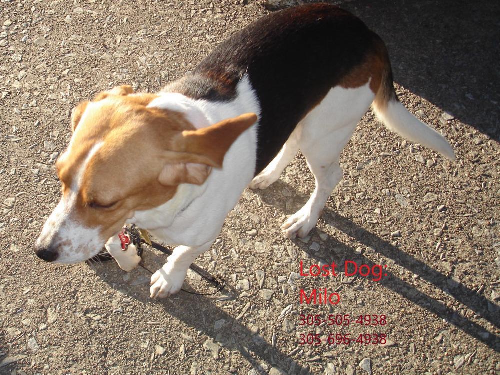 Lost Male Dog last seen Near MLK Blvd & Mulberry St, Macon, GA 31213
