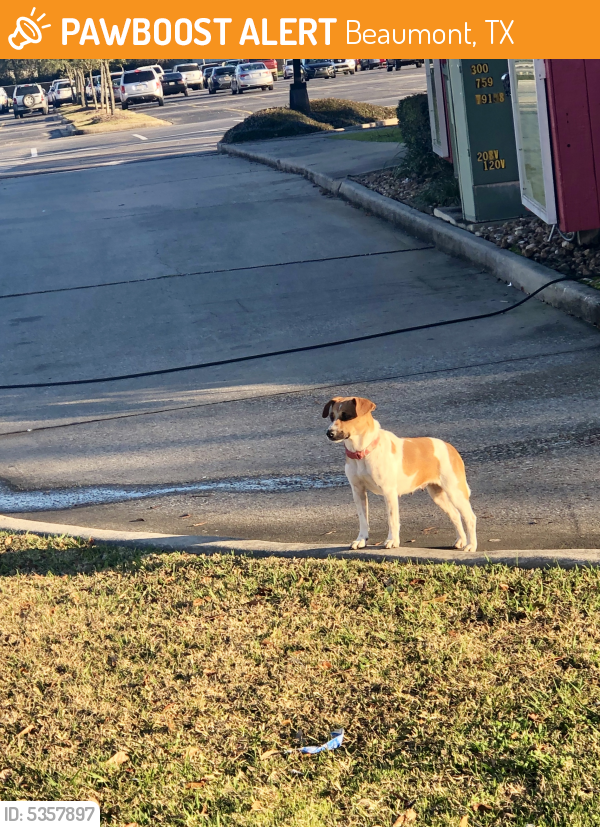 Found/Stray Female Dog last seen Near Wellington Pl & Dowlen Rd, Beaumont, TX 77706