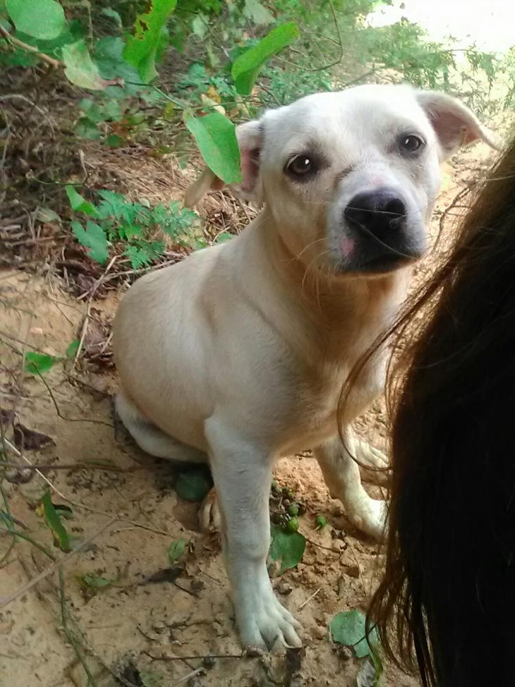 Lost Male Dog last seen Near Centerville Rd & Gunn Rd, Warner Robins, GA 31028