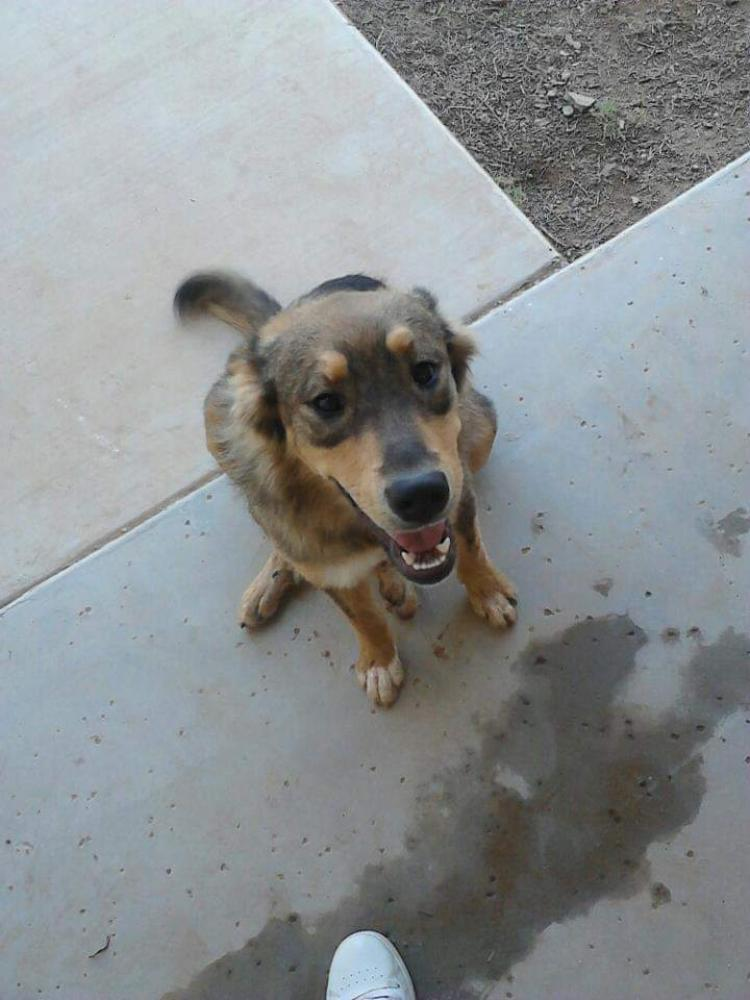Lost Female Dog last seen Near E Arbor Ave & 40th street, Mesa, AZ 85208